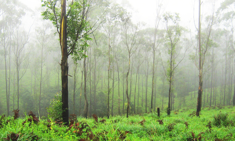 kerala tour packages with covid protocol